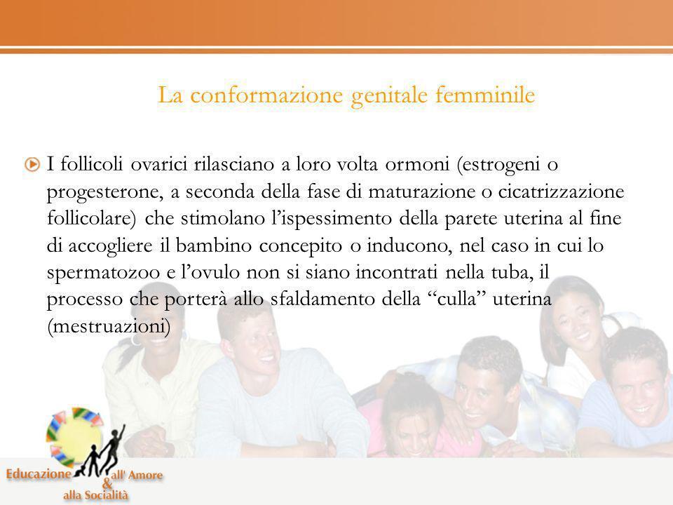 La conformazione genitale femminile