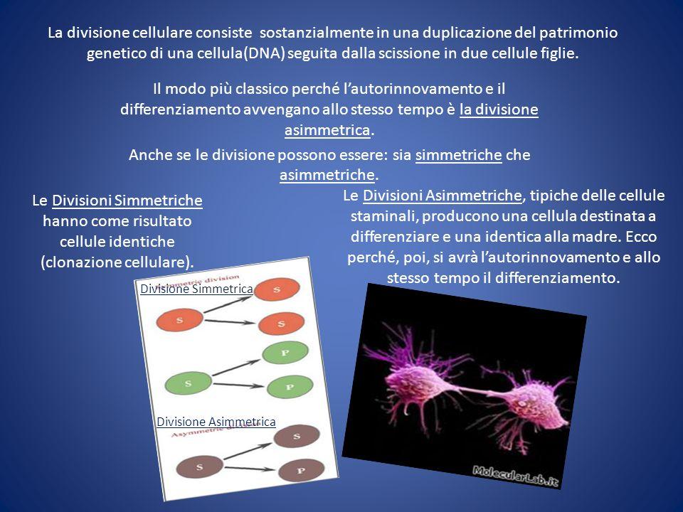 La divisione cellulare consiste sostanzialmente in una duplicazione del patrimonio genetico di una cellula(DNA) seguita dalla scissione in due cellule figlie.