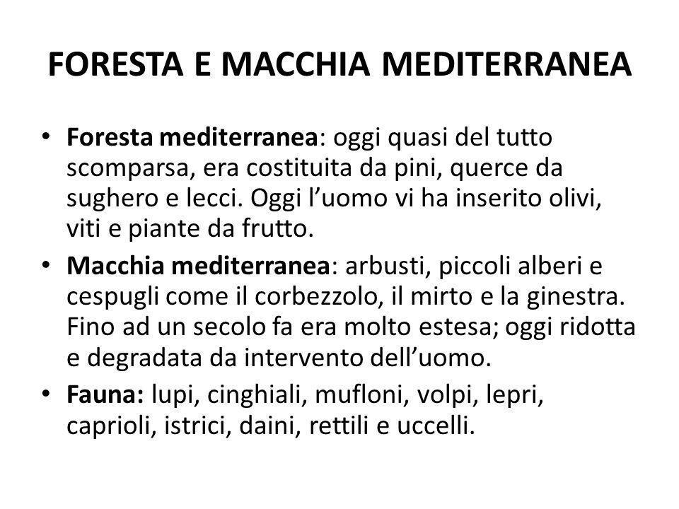 FORESTA E MACCHIA MEDITERRANEA