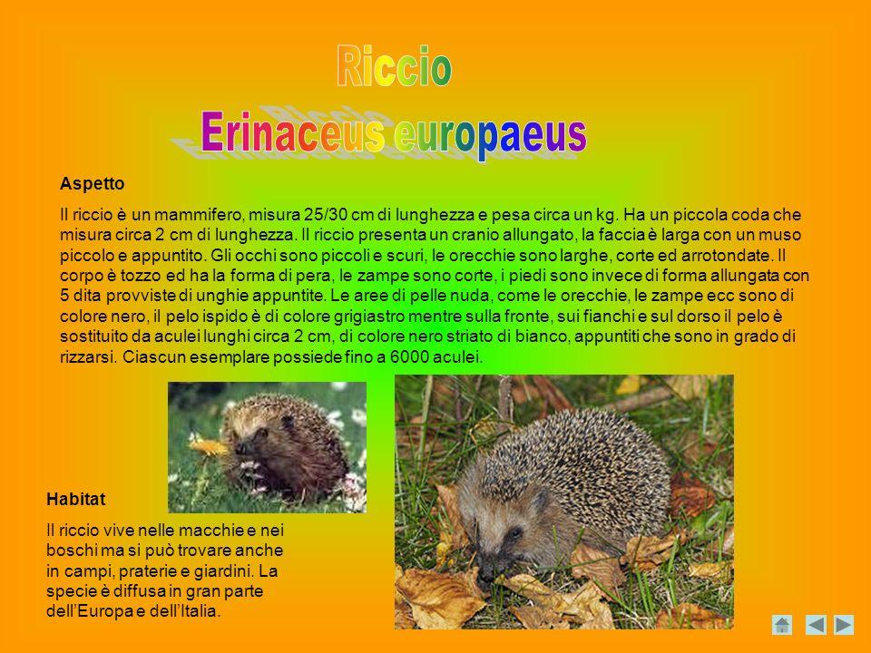Riccio Erinaceus europaeus Aspetto