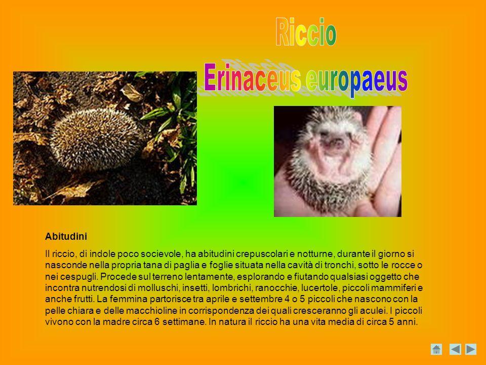 Riccio Erinaceus europaeus Abitudini