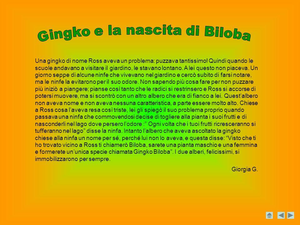 Gingko e la nascita di Biloba