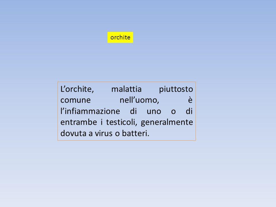 orchite L'orchite, malattia piuttosto comune nell'uomo, è l'infiammazione di uno o di entrambe i testicoli, generalmente dovuta a virus o batteri.