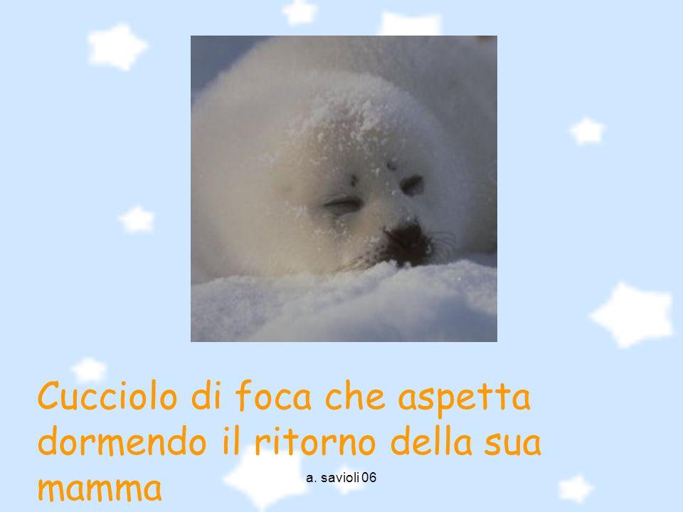 Cucciolo di foca che aspetta dormendo il ritorno della sua mamma
