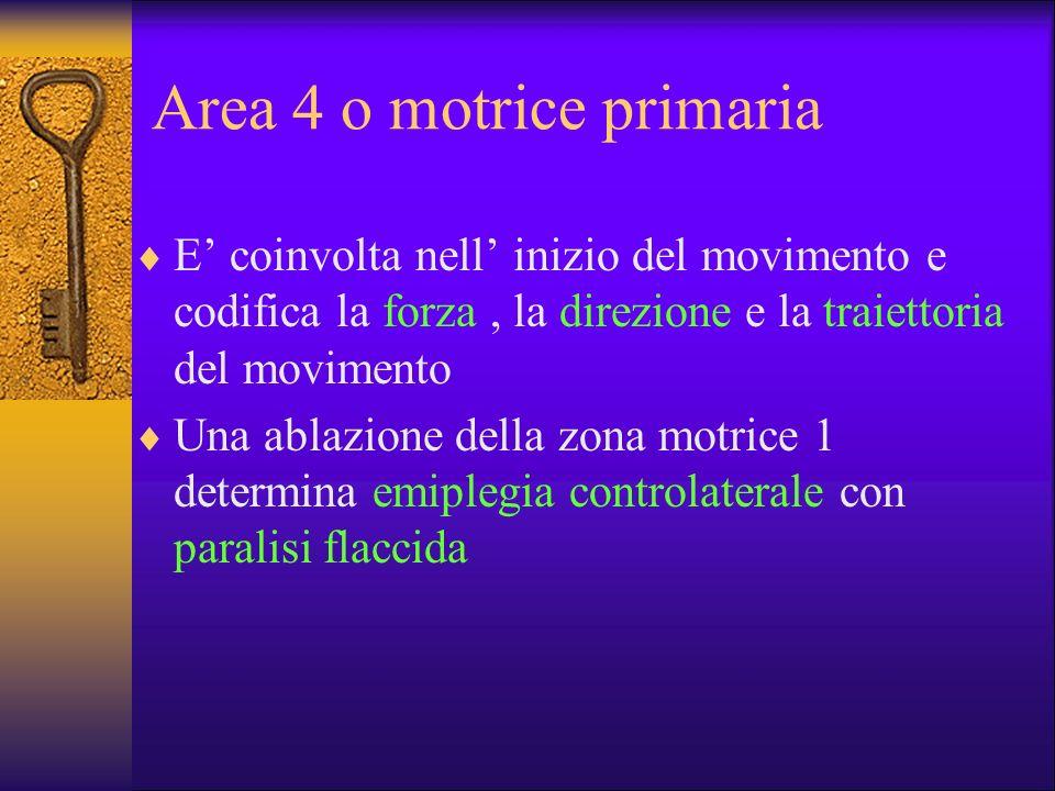 Area 4 o motrice primaria