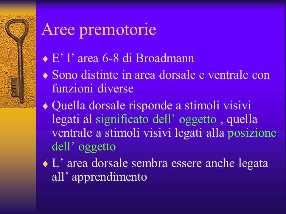 Aree premotorie E' l' area 6-8 di Broadmann