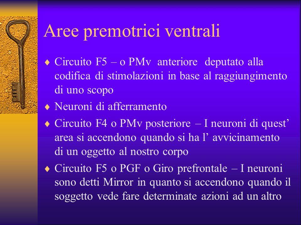 Aree premotrici ventrali