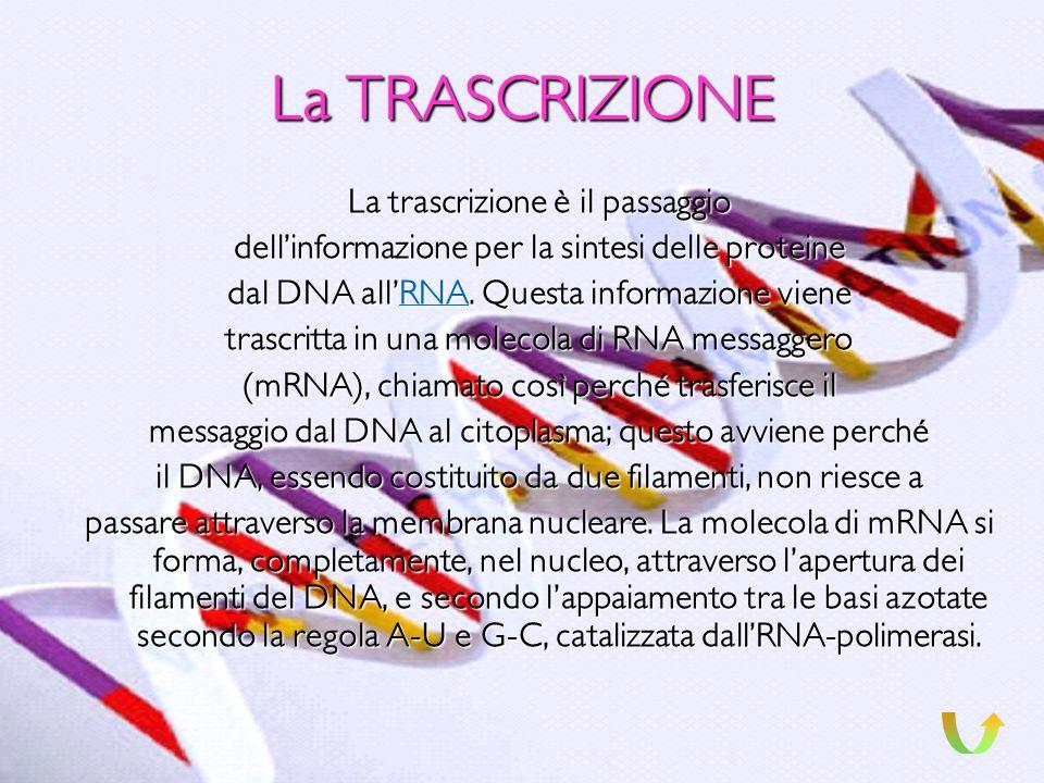 La TRASCRIZIONE La trascrizione è il passaggio
