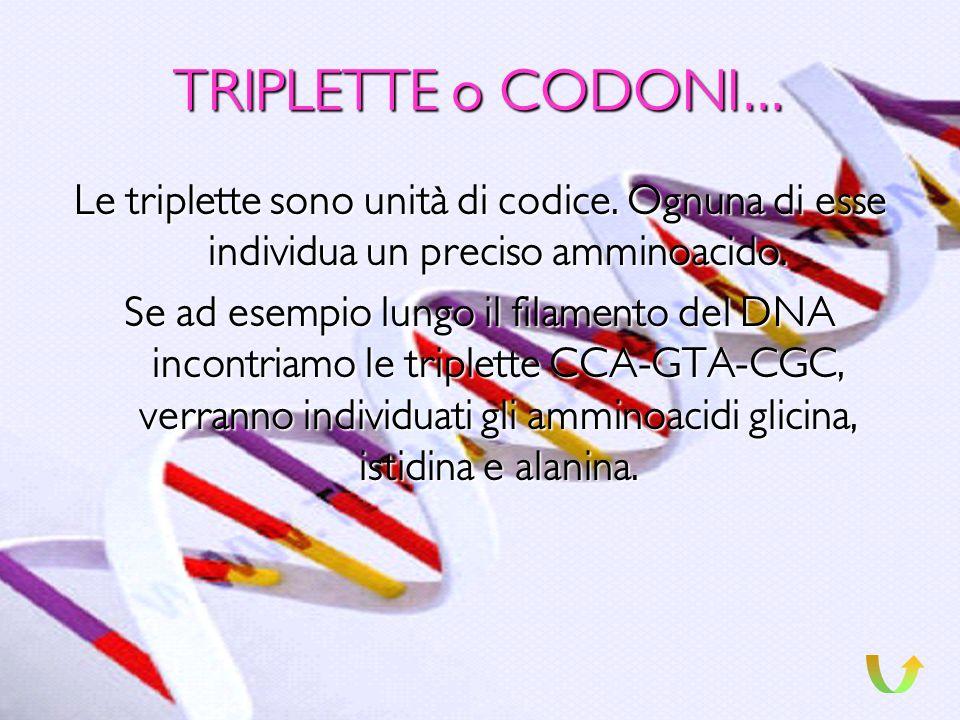 TRIPLETTE o CODONI… Le triplette sono unità di codice. Ognuna di esse individua un preciso amminoacido.