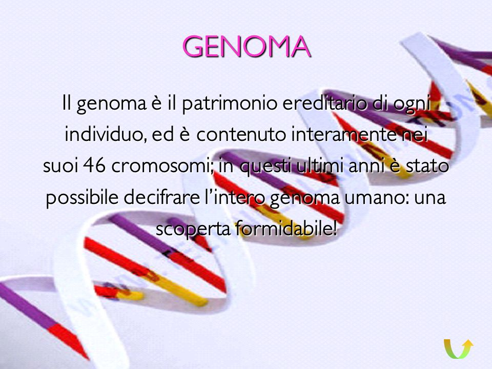 GENOMA Il genoma è il patrimonio ereditario di ogni