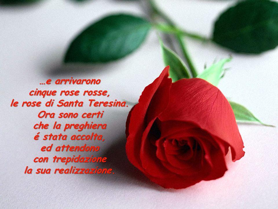 le rose di Santa Teresina.