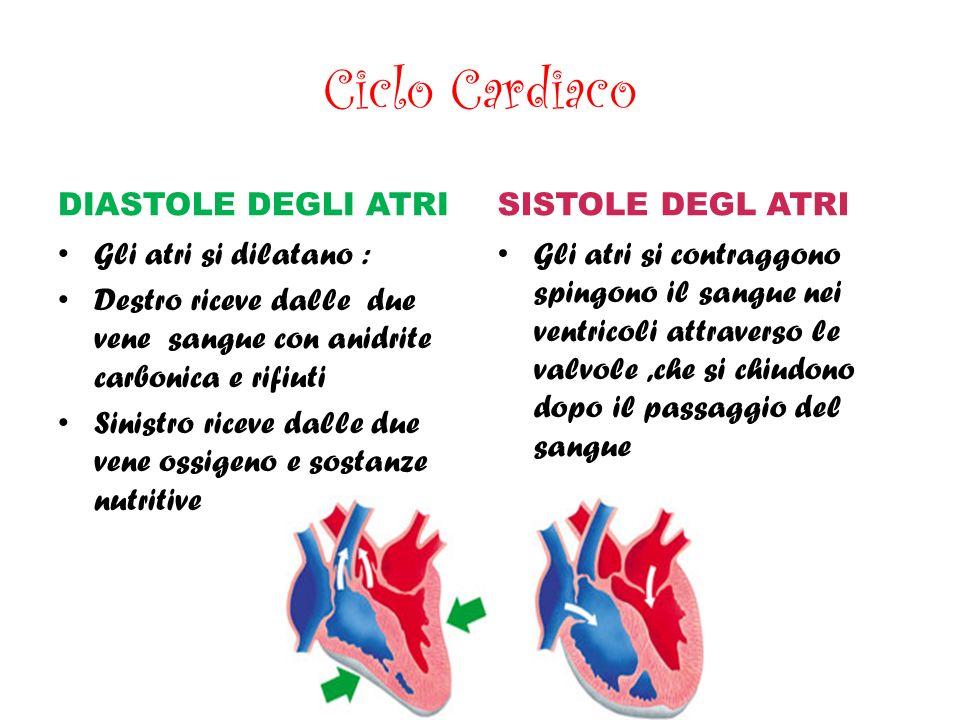 Ciclo Cardiaco DIASTOLE DEGLI ATRI SISTOLE DEGL ATRI