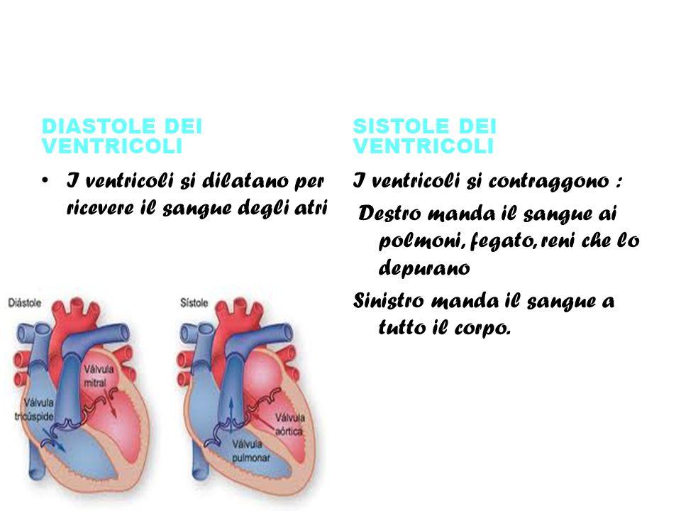I ventricoli si dilatano per ricevere il sangue degli atri