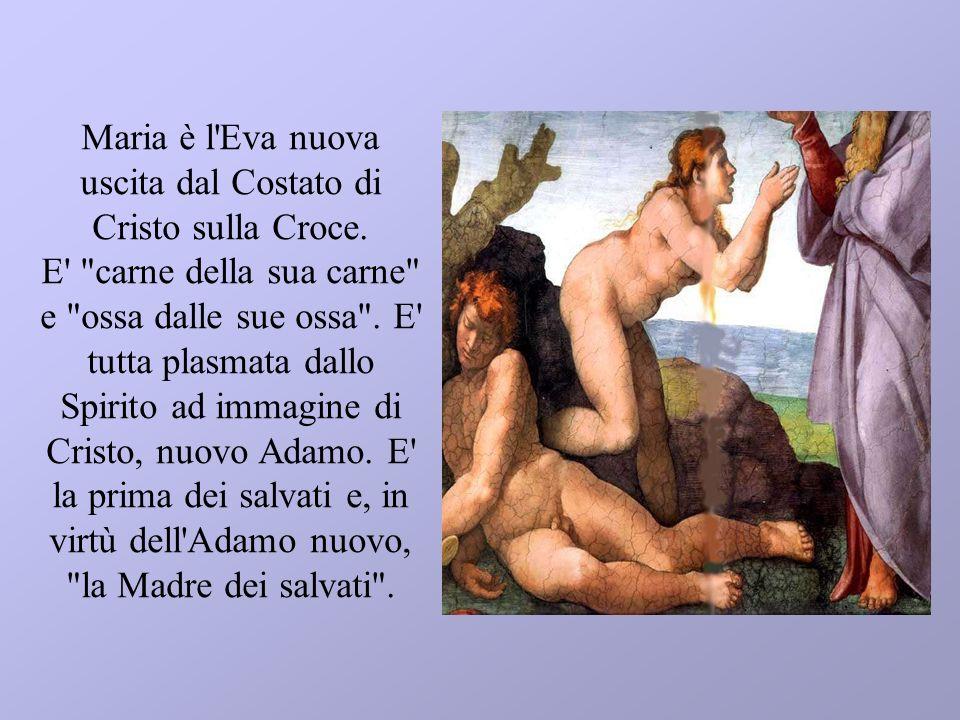 Maria è l Eva nuova uscita dal Costato di Cristo sulla Croce
