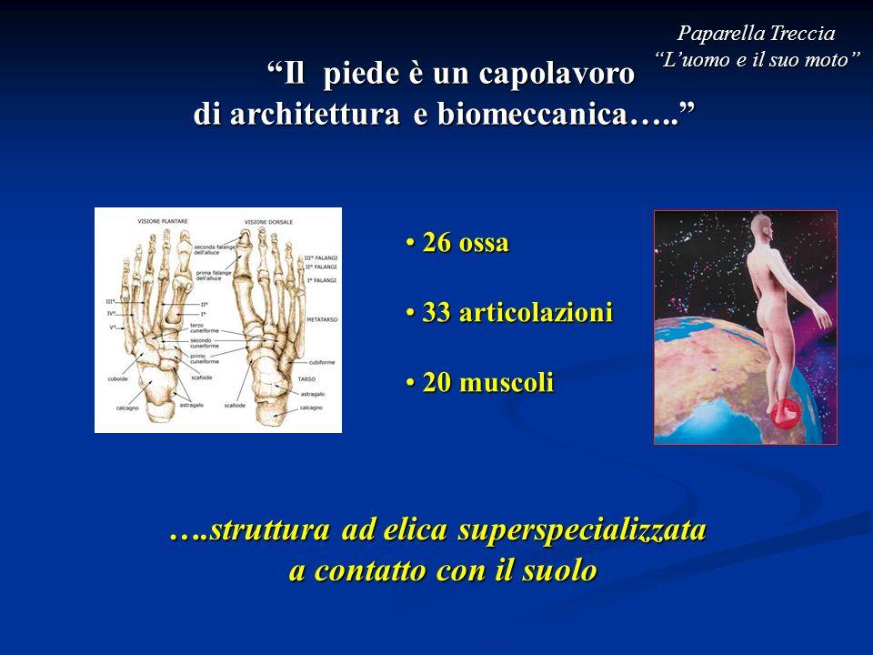Il piede è un capolavoro di architettura e biomeccanica…..