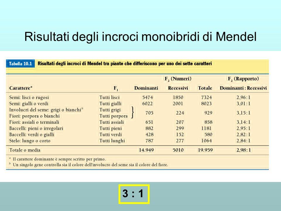 Risultati degli incroci monoibridi di Mendel
