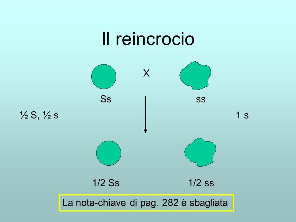 Il reincrocio X Ss ss ½ S, ½ s 1 s 1/2 Ss 1/2 ss