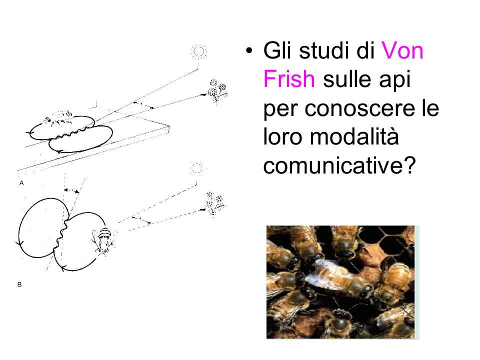 Gli studi di Von Frish sulle api per conoscere le loro modalità comunicative