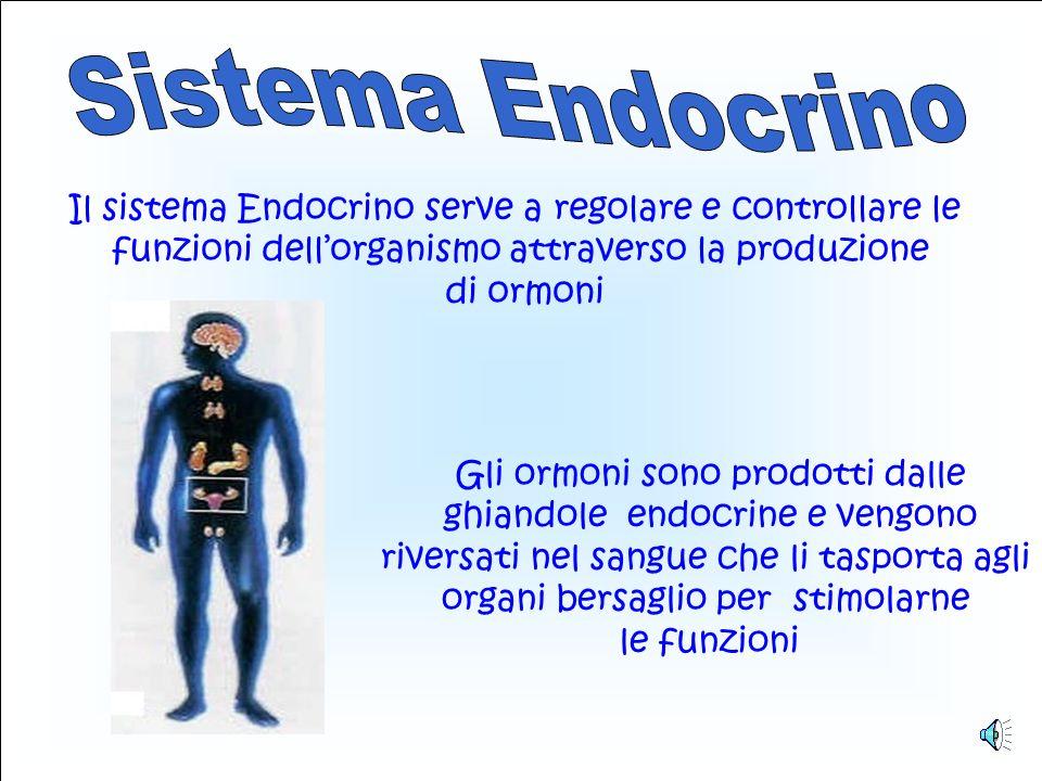 Sistema Endocrino Il sistema Endocrino serve a regolare e controllare le. funzioni dell'organismo attraverso la produzione.