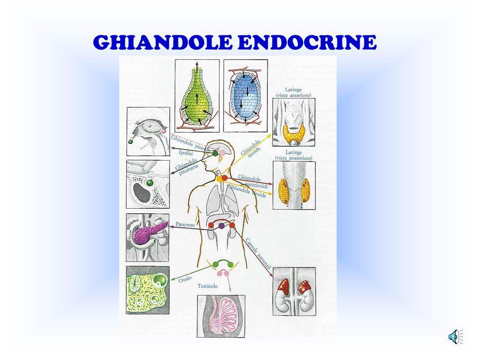 GHIANDOLE ENDOCRINE