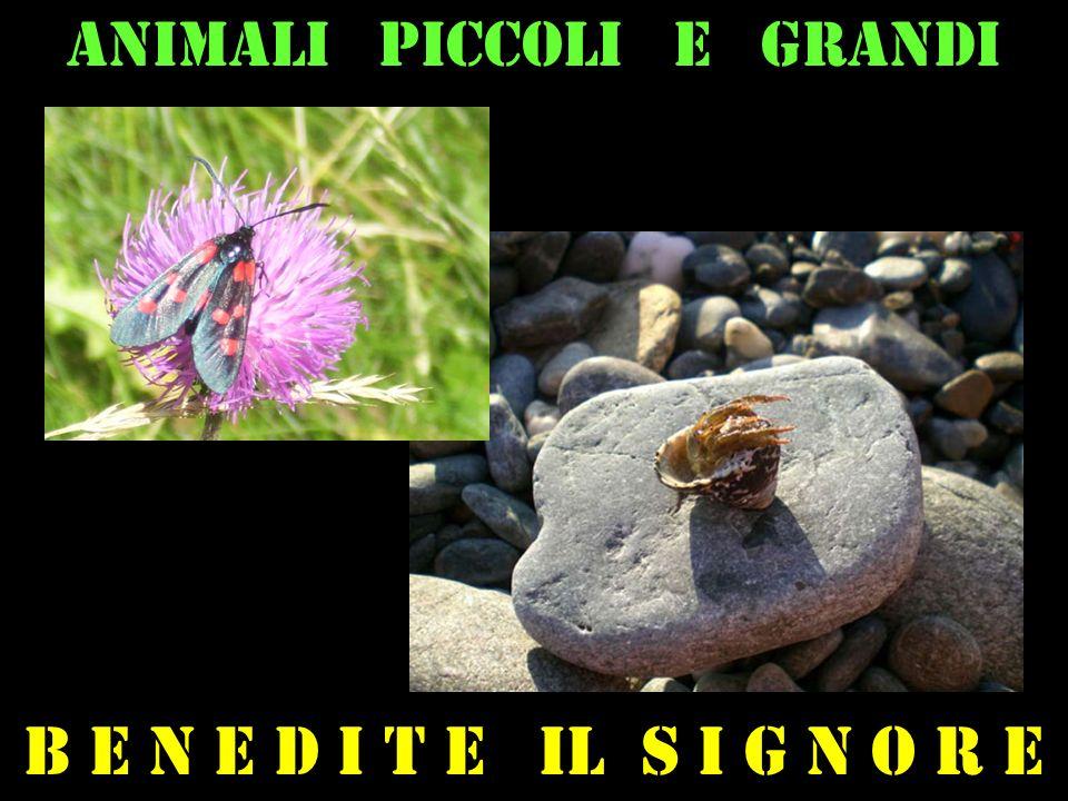 Animali piccoli e grandi