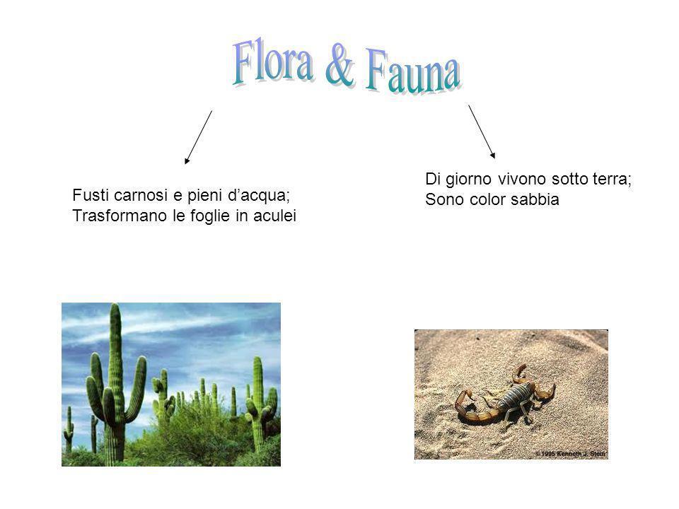 Flora & Fauna Di giorno vivono sotto terra; Sono color sabbia