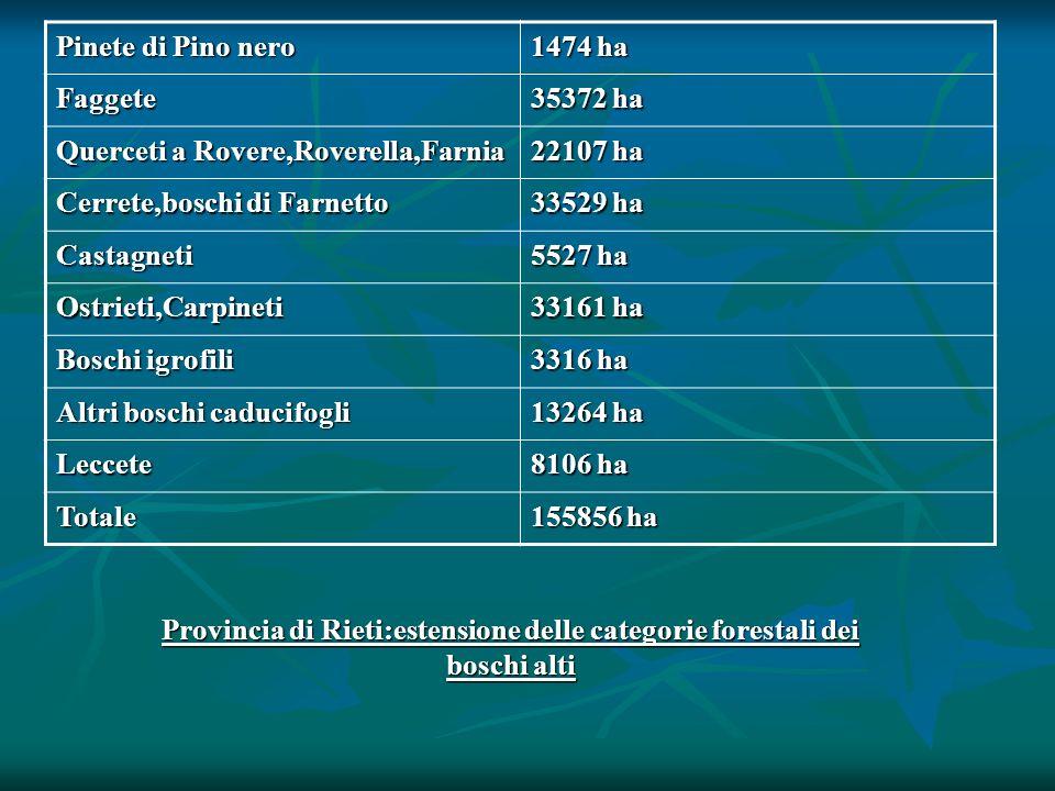 Pinete di Pino nero 1474 ha. Faggete. 35372 ha. Querceti a Rovere,Roverella,Farnia. 22107 ha. Cerrete,boschi di Farnetto.