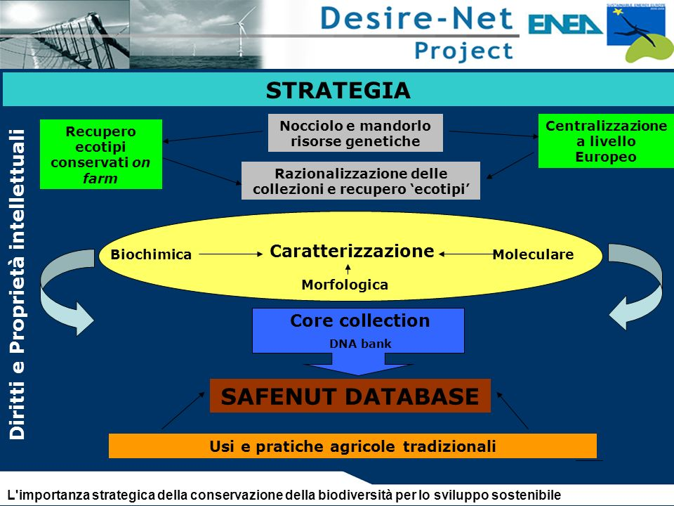 STRATEGIA STRATEGIA SAFENUT DATABASE