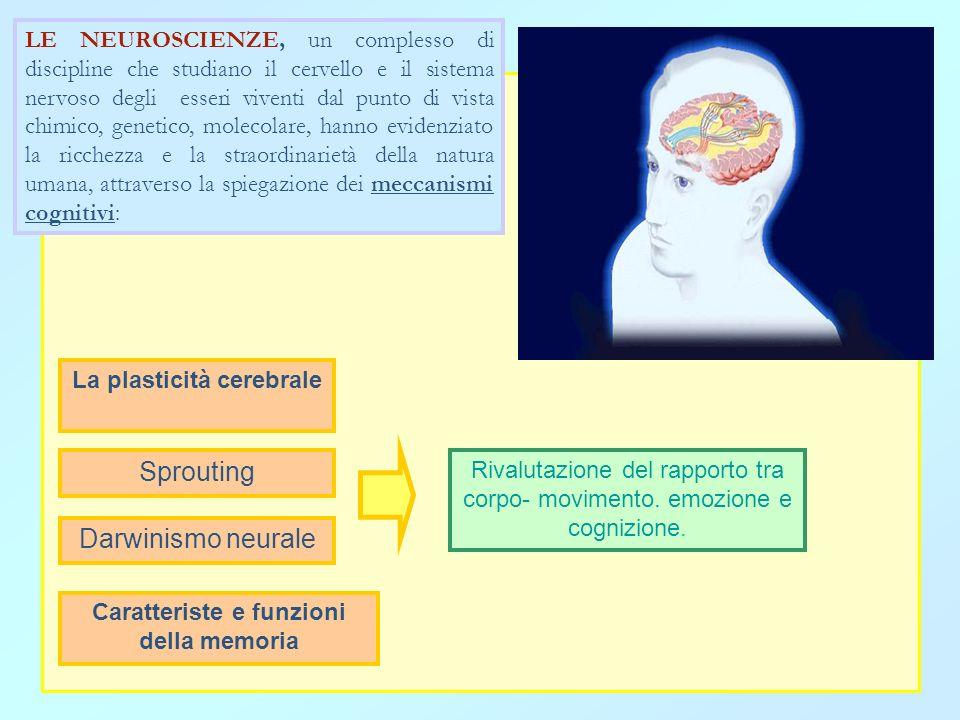 La plasticità cerebrale Caratteriste e funzioni della memoria
