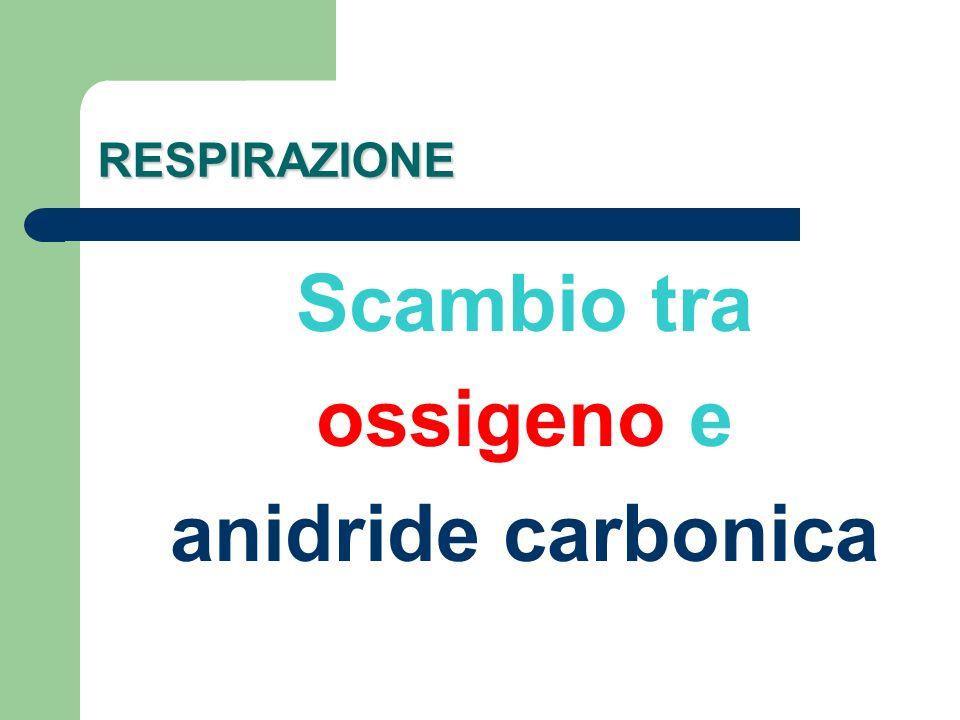 Scambio tra ossigeno e anidride carbonica