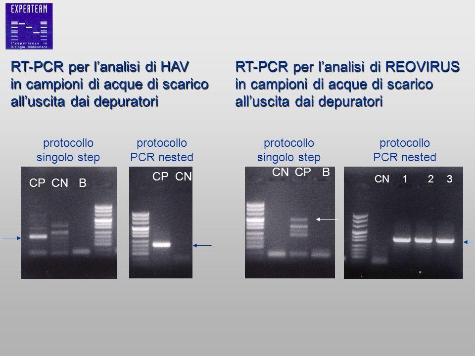 RT-PCR per l'analisi di HAV