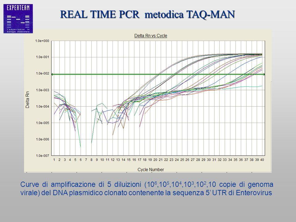 REAL TIME PCR metodica TAQ-MAN