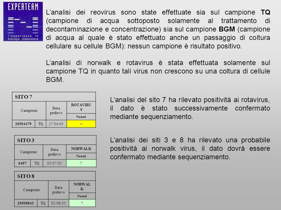 L'analisi dei reovirus sono state effettuate sia sul campione TQ (campione di acqua sottoposto solamente al trattamento di decontaminazione e concentrazione) sia sul campione BGM (campione di acqua al quale è stato effettuato anche un passaggio di coltura cellulare su cellule BGM): nessun campione è risultato positivo.