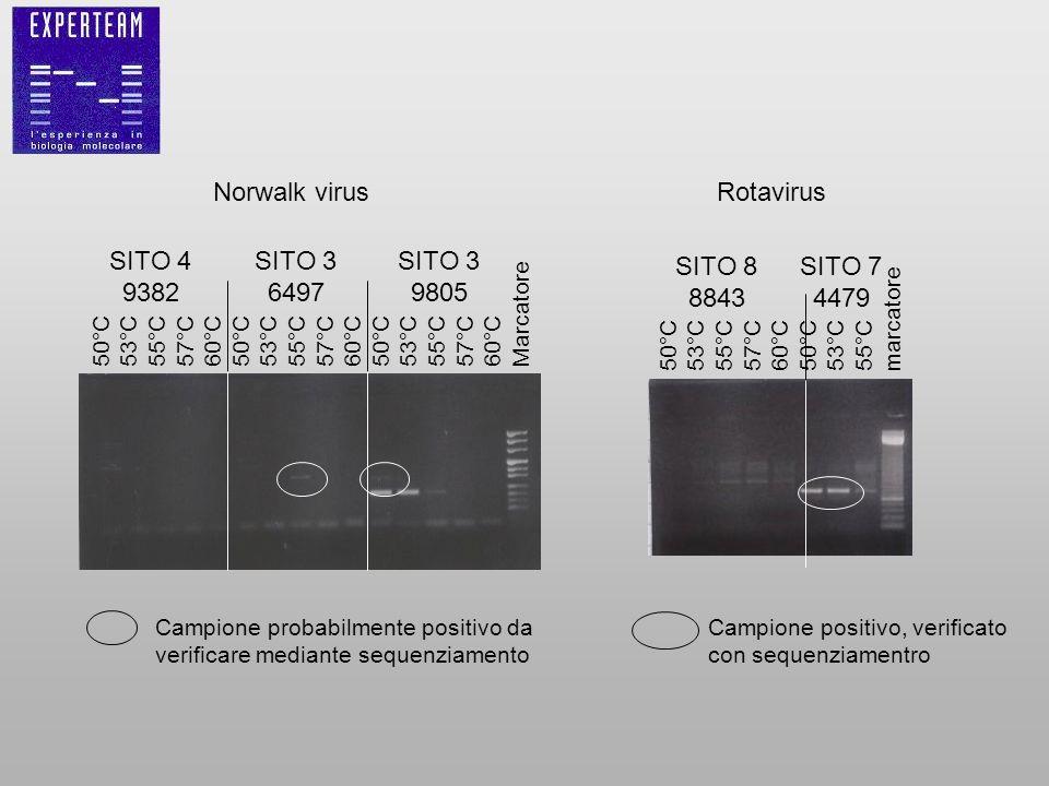 Norwalk virus Rotavirus SITO 4 9382 SITO 3 6497 9805 SITO 8 8843
