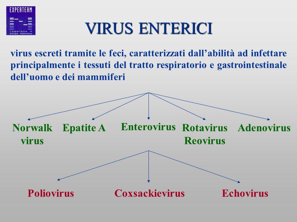 VIRUS ENTERICI Norwalk Epatite A Enterovirus Rotavirus Reovirus