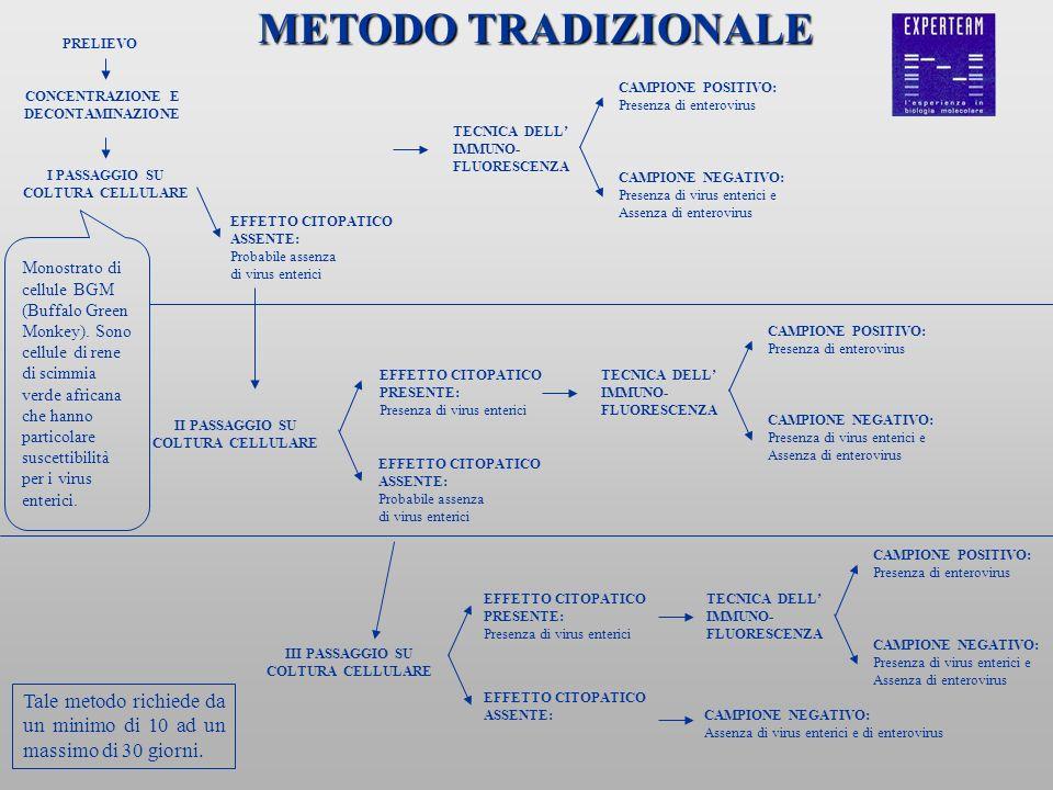 METODO TRADIZIONALE PRELIEVO. CAMPIONE POSITIVO: Presenza di enterovirus. CONCENTRAZIONE E. DECONTAMINAZIONE.