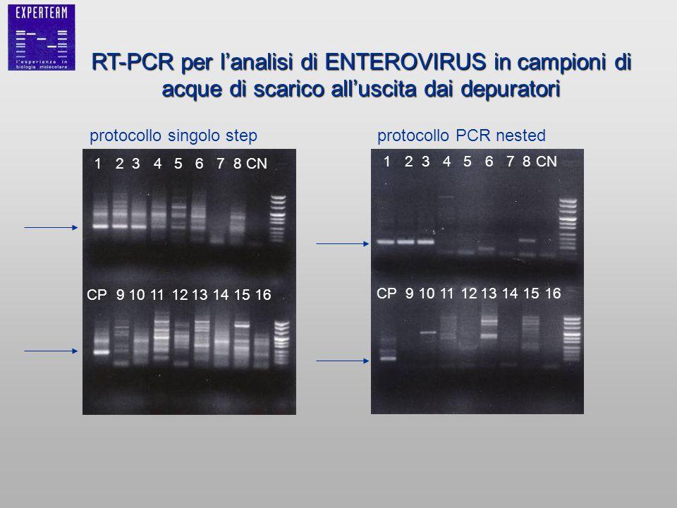 RT-PCR per l'analisi di ENTEROVIRUS in campioni di acque di scarico all'uscita dai depuratori