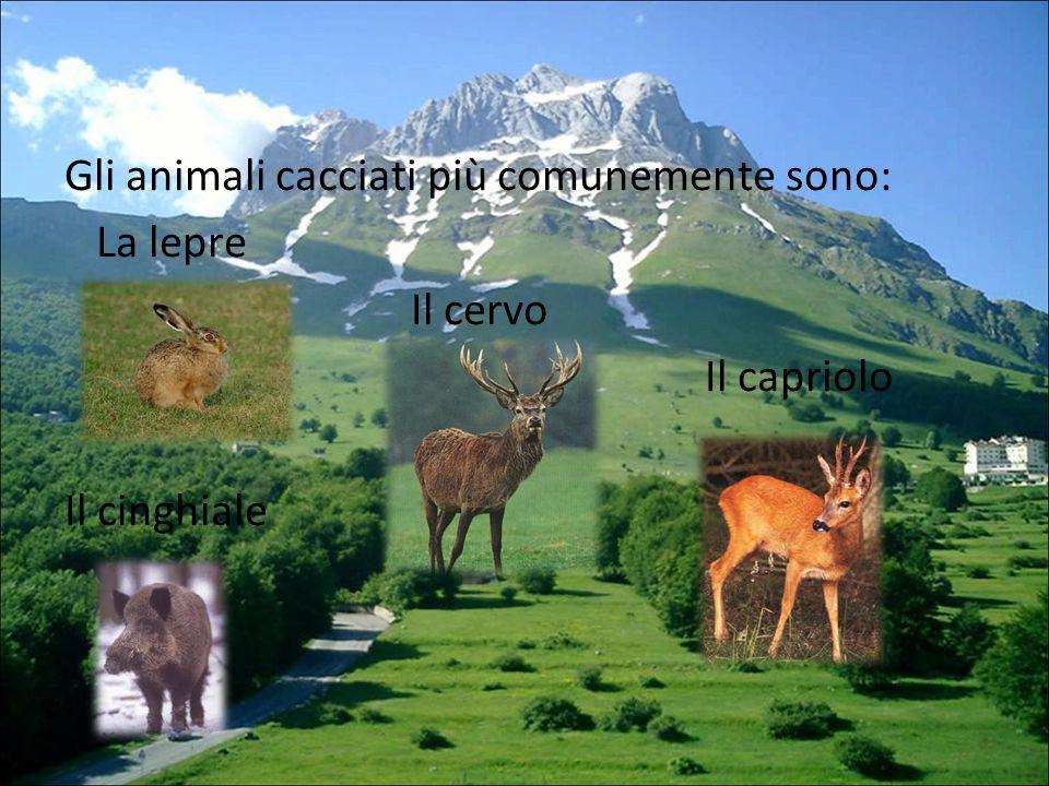 Gli animali cacciati più comunemente sono: La lepre Il cervo Il capriolo Il cinghiale