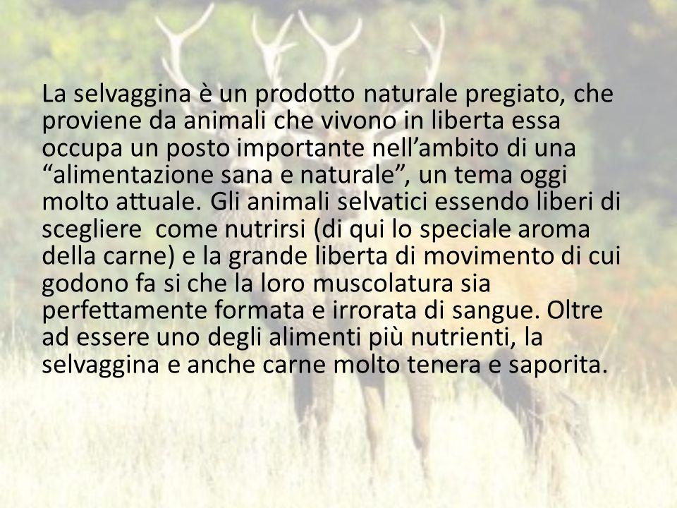 La selvaggina è un prodotto naturale pregiato, che proviene da animali che vivono in liberta essa occupa un posto importante nell'ambito di una alimentazione sana e naturale , un tema oggi molto attuale.