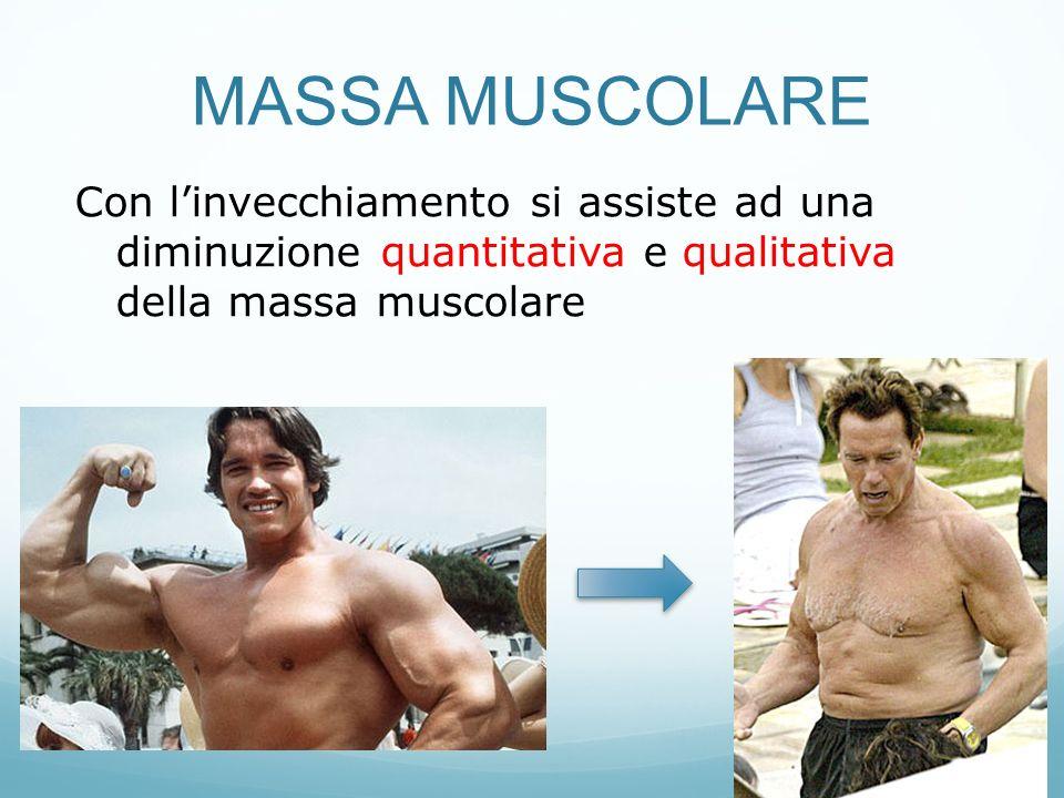 MASSA MUSCOLARE Con l'invecchiamento si assiste ad una diminuzione quantitativa e qualitativa della massa muscolare.