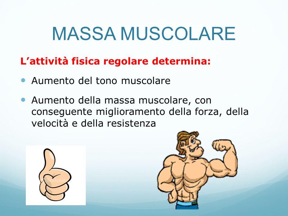 MASSA MUSCOLARE L'attività fisica regolare determina: