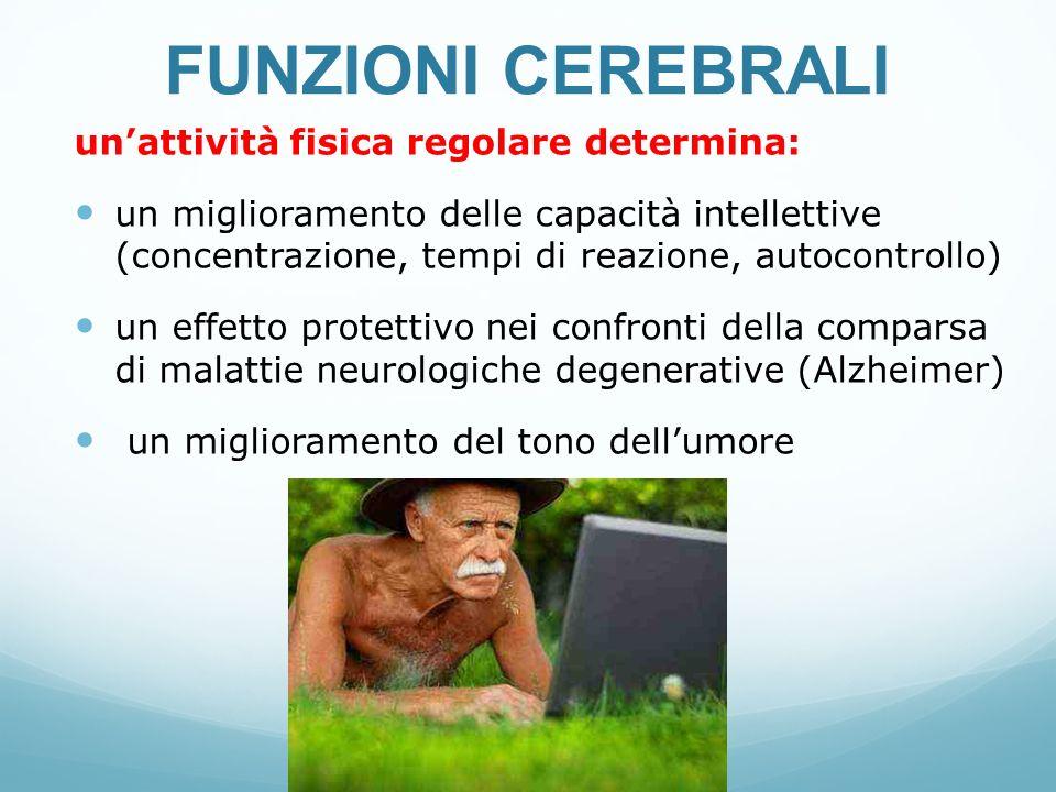 FUNZIONI CEREBRALI un'attività fisica regolare determina: