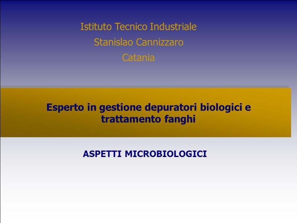 Esperto in gestione depuratori biologici e trattamento fanghi