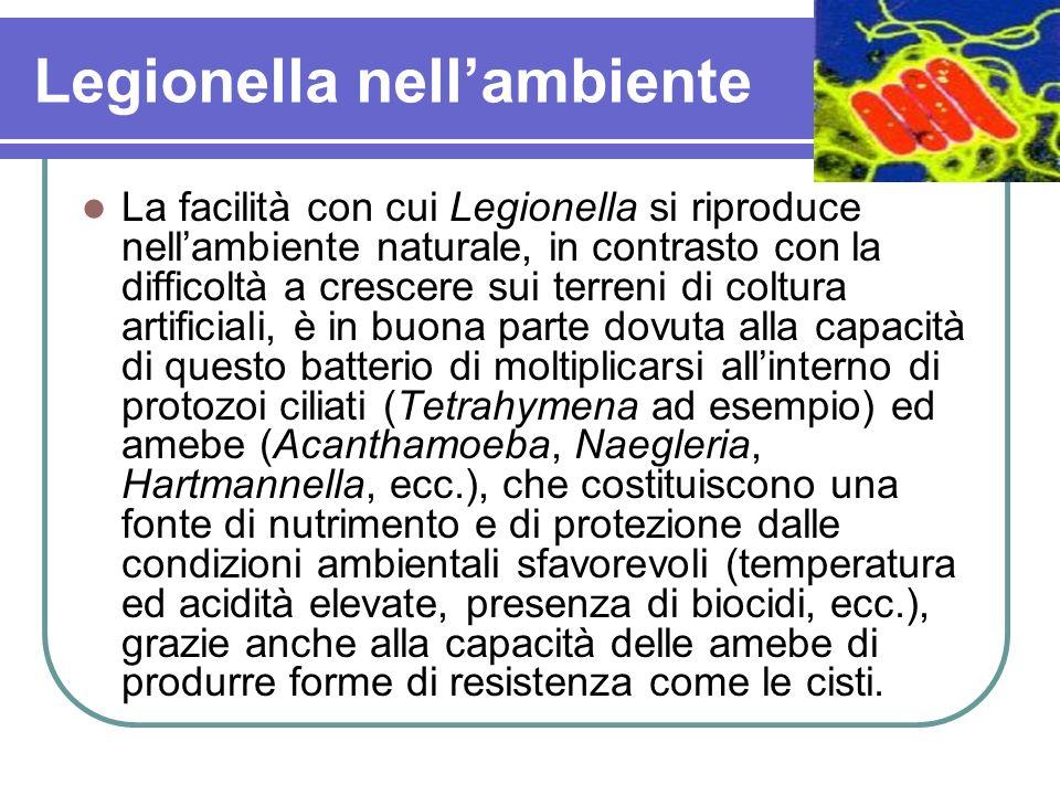 Legionella nell'ambiente