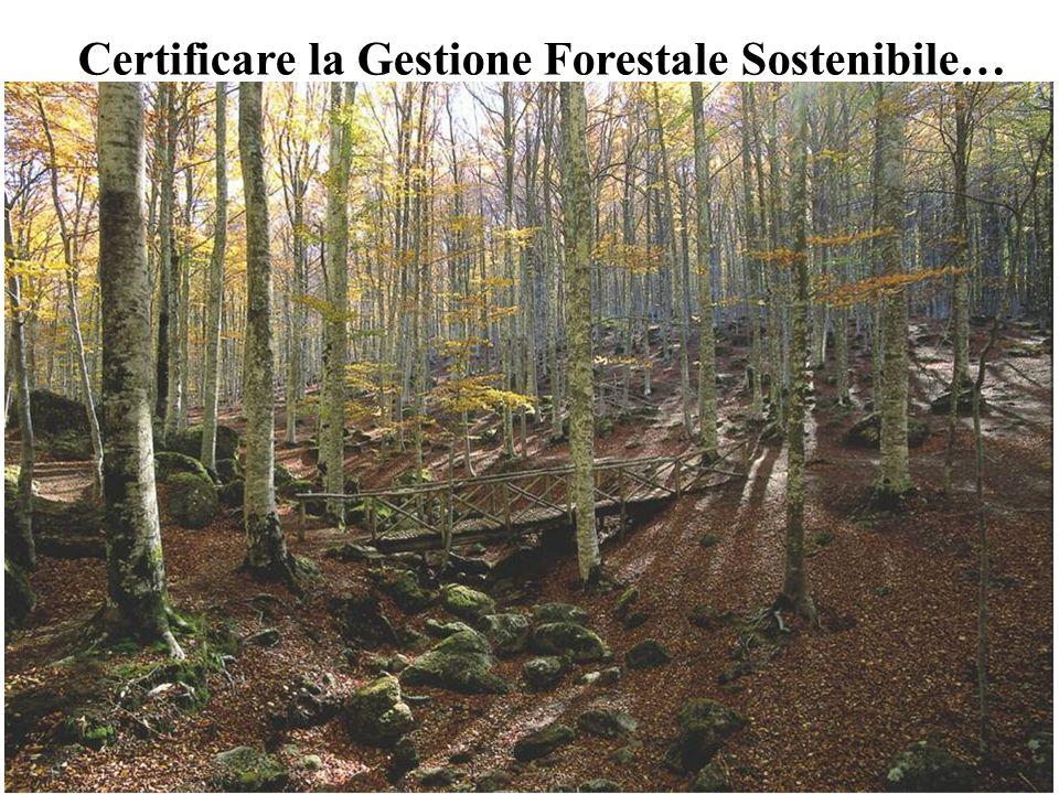 Certificare la Gestione Forestale Sostenibile…