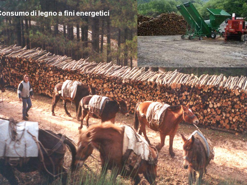 Consumo di legno a fini energetici