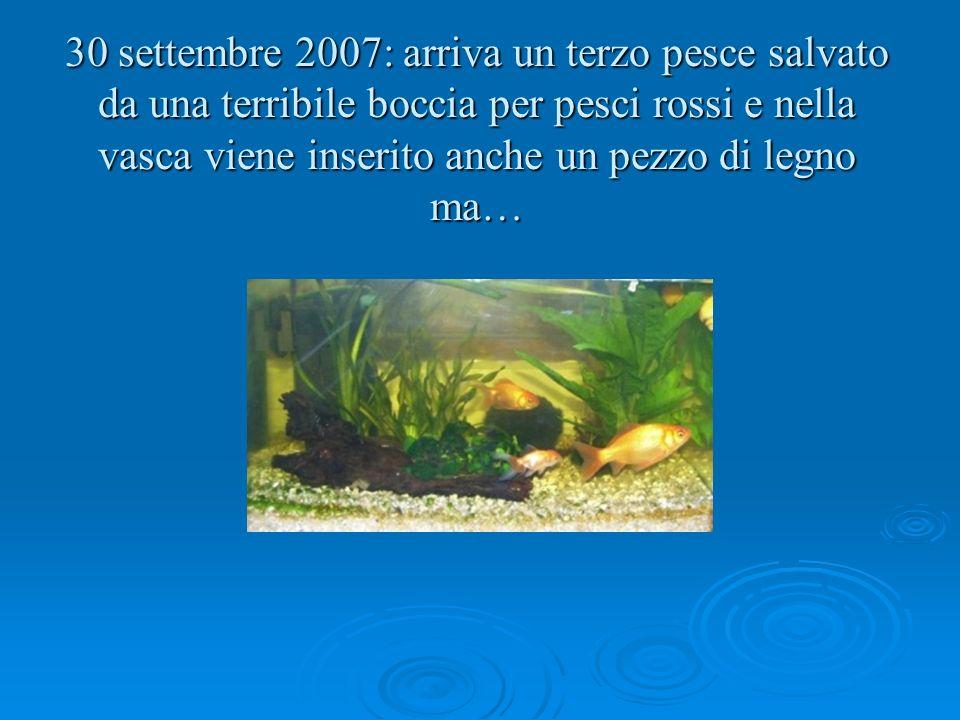 Nati nel segno dei pesci ppt scaricare for Filtro vasca pesci rossi