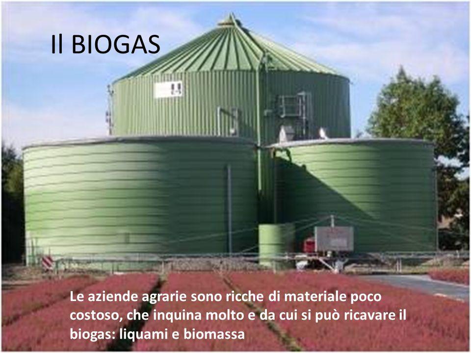 Il BIOGAS Le aziende agrarie sono ricche di materiale poco costoso, che inquina molto e da cui si può ricavare il biogas: liquami e biomassa.