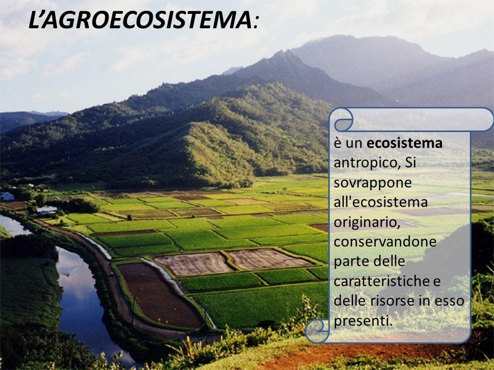 L'AGROECOSISTEMA: