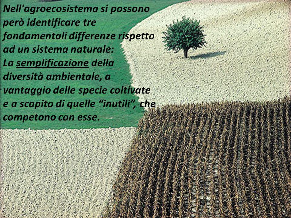 Nell agroecosistema si possono però identificare tre fondamentali differenze rispetto ad un sistema naturale: